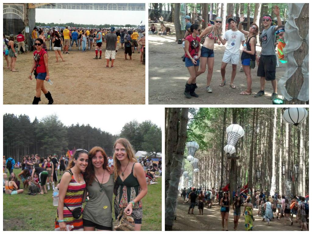 Eforest 2013